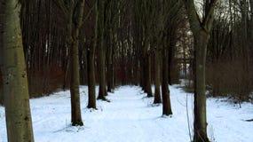 在雪报道的森林路在冬天期间 免版税图库摄影