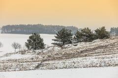 在雪报道的领域的树 黑色蓝色人行道照片风景定了调子空白冬天森林 图库摄影
