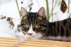 在雪撬后的猫 免版税库存照片