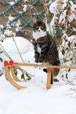 在雪撬的猫 库存照片