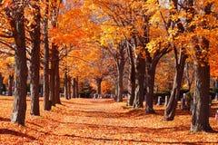 在雪松树丛公墓的胡同 库存照片