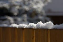 在雪松篱芭顶部的被日光照射了雪在后院 库存图片