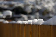 在雪松篱芭顶部的被日光照射了雪在后院 库存照片
