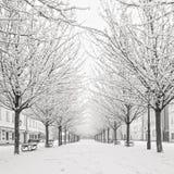 在Kampa海岛,布拉格的雪树 免版税库存照片