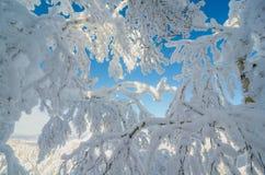 在雪森林里面 免版税图库摄影