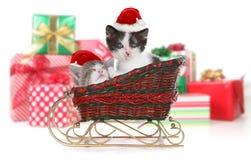 在雪橇的圣诞节礼物围拢的可爱的小猫 图库摄影