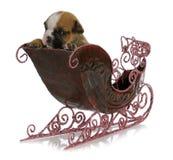 在雪橇的小狗 免版税库存照片
