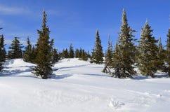 在雪漂泊的背景吃了 库存照片