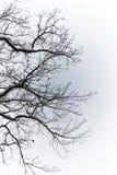在雪特写镜头的树 库存照片