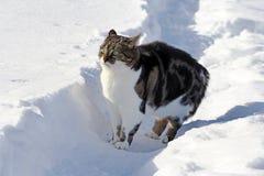 在雪的一只小的猫被惊吓并且做一个滑稽的姿势 库存图片