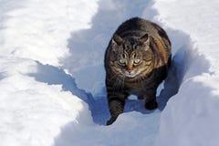 在雪的一只小的肥胖猫被惊吓并且做一个滑稽的姿势 库存图片