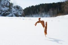 在雪的一条冻河留下一片干燥草叶在雪中的 库存照片
