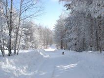 在雪的一条狗 免版税库存照片