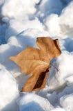 在雪的一片叶子 免版税库存图片