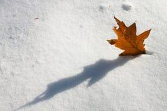 在雪的一片黄色叶子 免版税库存图片