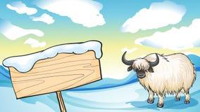 在雪的一头牦牛 免版税图库摄影