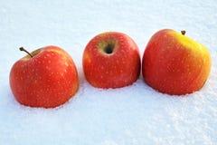 在雪的三个苹果 库存图片
