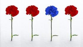 在雪的三支红色和一支蓝色康乃馨 免版税库存图片