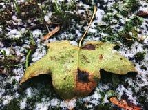在雪的下落的叶子 免版税图库摄影