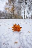 在雪的下落的秋叶在森林里 免版税库存照片