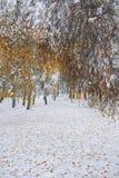 在雪的下落的秋叶在森林里 免版税库存图片