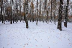 在雪的下落的秋叶在森林里 免版税图库摄影