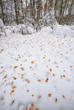在雪的下落的秋叶在森林里 库存图片