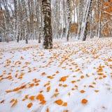 在雪的下落的秋叶在森林里 库存照片