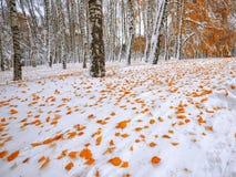 在雪的下落的秋叶在森林里 图库摄影