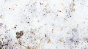 在雪的下落的秋叶 再见秋天,你好冬天 免版税库存照片