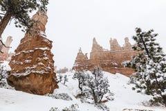 在雪的不祥之物在布莱斯峡谷国家公园在南犹他 库存照片