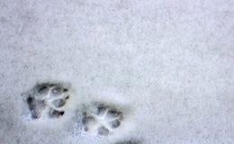 在雪的两个狗脚印 免版税库存图片
