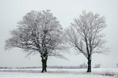 在雪的两棵树 免版税图库摄影