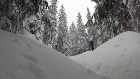 在雪的云杉的分支 雪风暴在森林里 股票录像