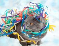 在雪的五颜六色的飘带卷入的猫 免版税库存照片