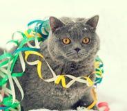 在雪的五颜六色的飘带卷入的猫 免版税图库摄影