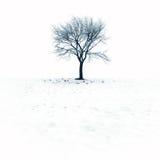 在雪的仅有的结构树 免版税库存照片
