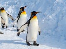 在雪的企鹅步行 免版税库存照片
