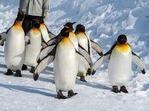 在雪的企鹅步行 免版税库存图片