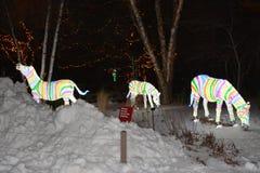 在雪的假日斑马 免版税库存图片