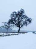 在雪的偏僻的苹果树 库存图片