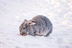 在雪的兔子 免版税库存照片