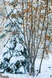 在雪的冬天结构树 免版税库存照片