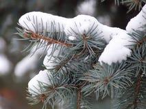 在雪的冷杉分支 免版税图库摄影