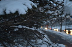 在雪的冷杉和汽车夜 图库摄影
