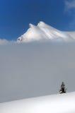 在雪的冷杉在山前面 库存照片