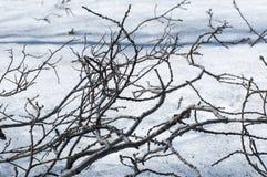 在雪的分支 免版税库存照片