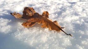 在雪的前片橡木叶子 库存照片