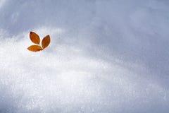 在雪的叶子 库存图片