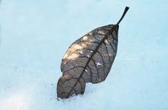 在雪的叶子 库存照片